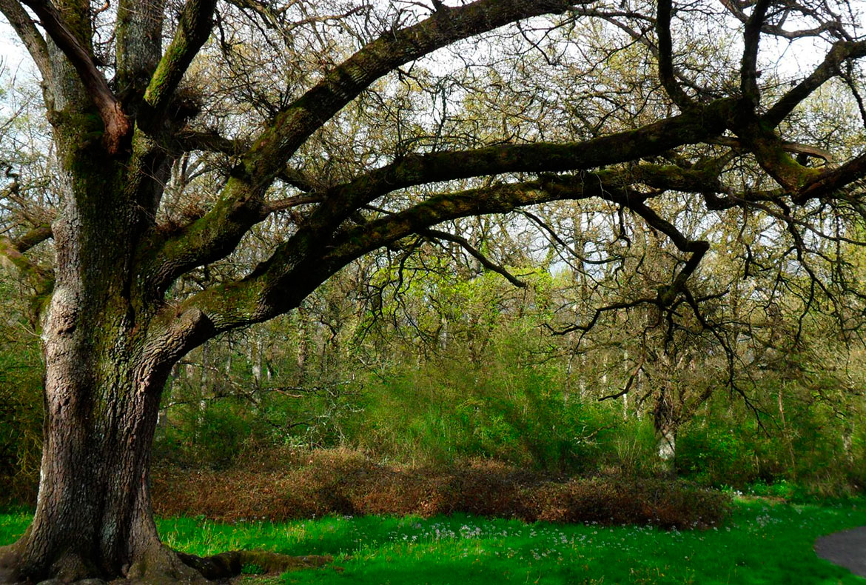 Bosque de Orgi casas rurales muy grandes viajes para grupos de amigos y familias numerosas 20 habitaciones turismo rural en plena naturaleza en Arruitz en el norte de Navarra